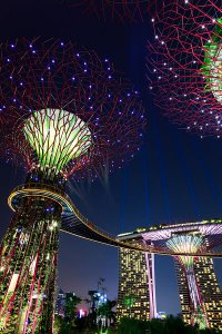 A view of the Supertree Grove and the elevated walkway known as the OCBC Skyway, located within Gardens by the Bay, showing the Marina Bay Sands Wonder Full Light Show in the background.
