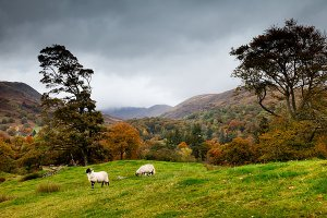 Autumn in Rydal Village, located within the English Lake District National Park.