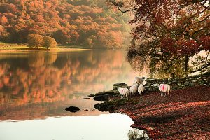Autumn in Coniston, located within the English Lake District National Park.