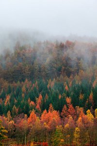 Autumn by Derwent Water, located within the English Lake District National Park.